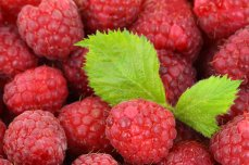 background-berry-detail-food-42219
